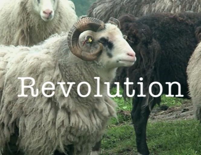eva-bakkeslett-revolution
